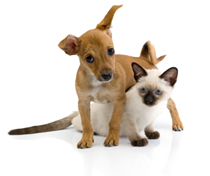 Research before you buy pet insurance