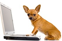 Confused about pet insurance